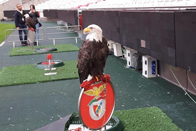 Stadion Benfica