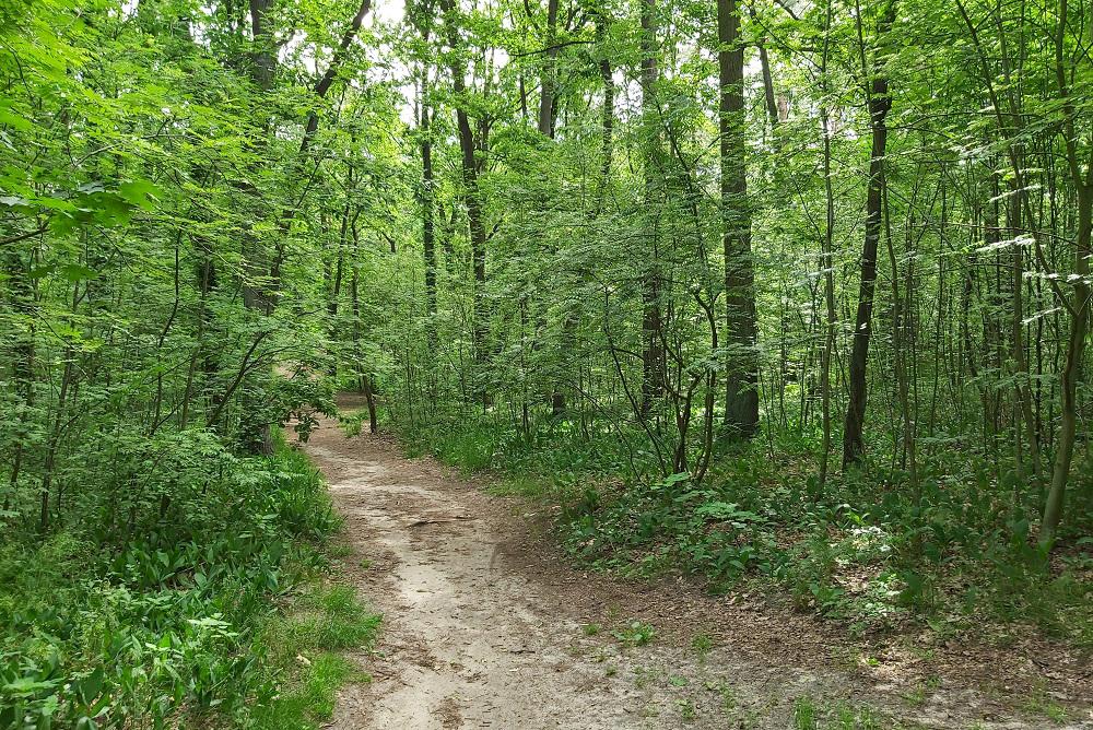 Podkowa Leśna - Leśny Park Miejski